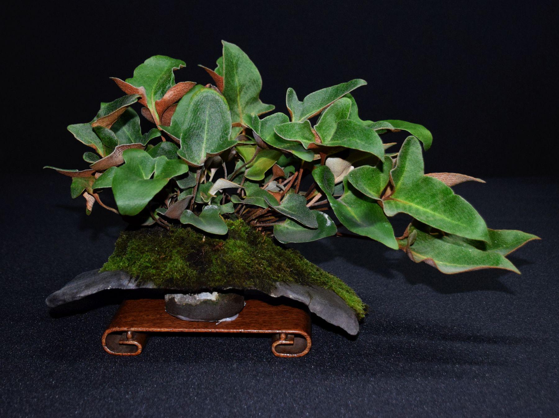 bonsai-museum-luis-vallejo-034
