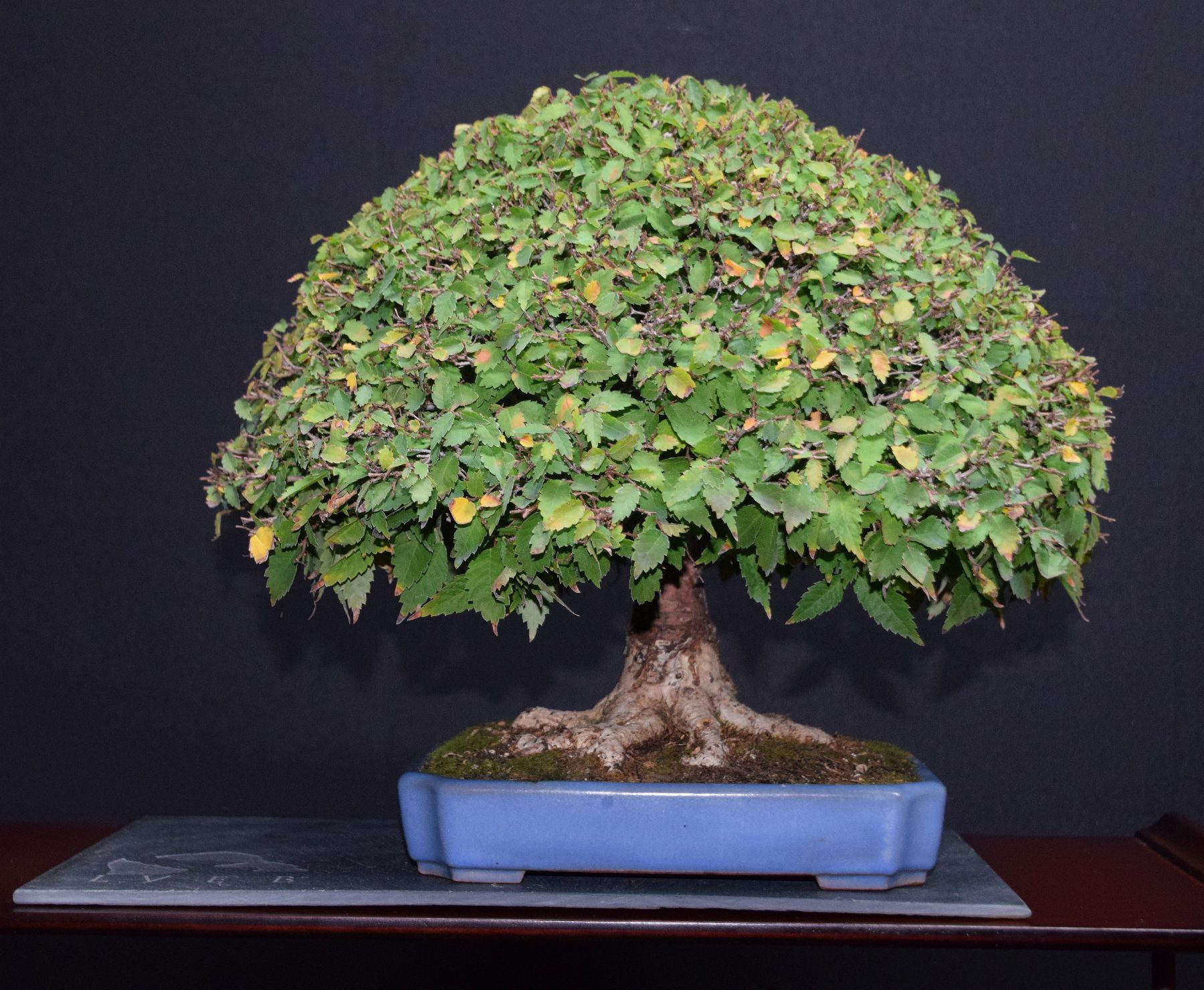 bonsai-museum-luis-vallejo-036