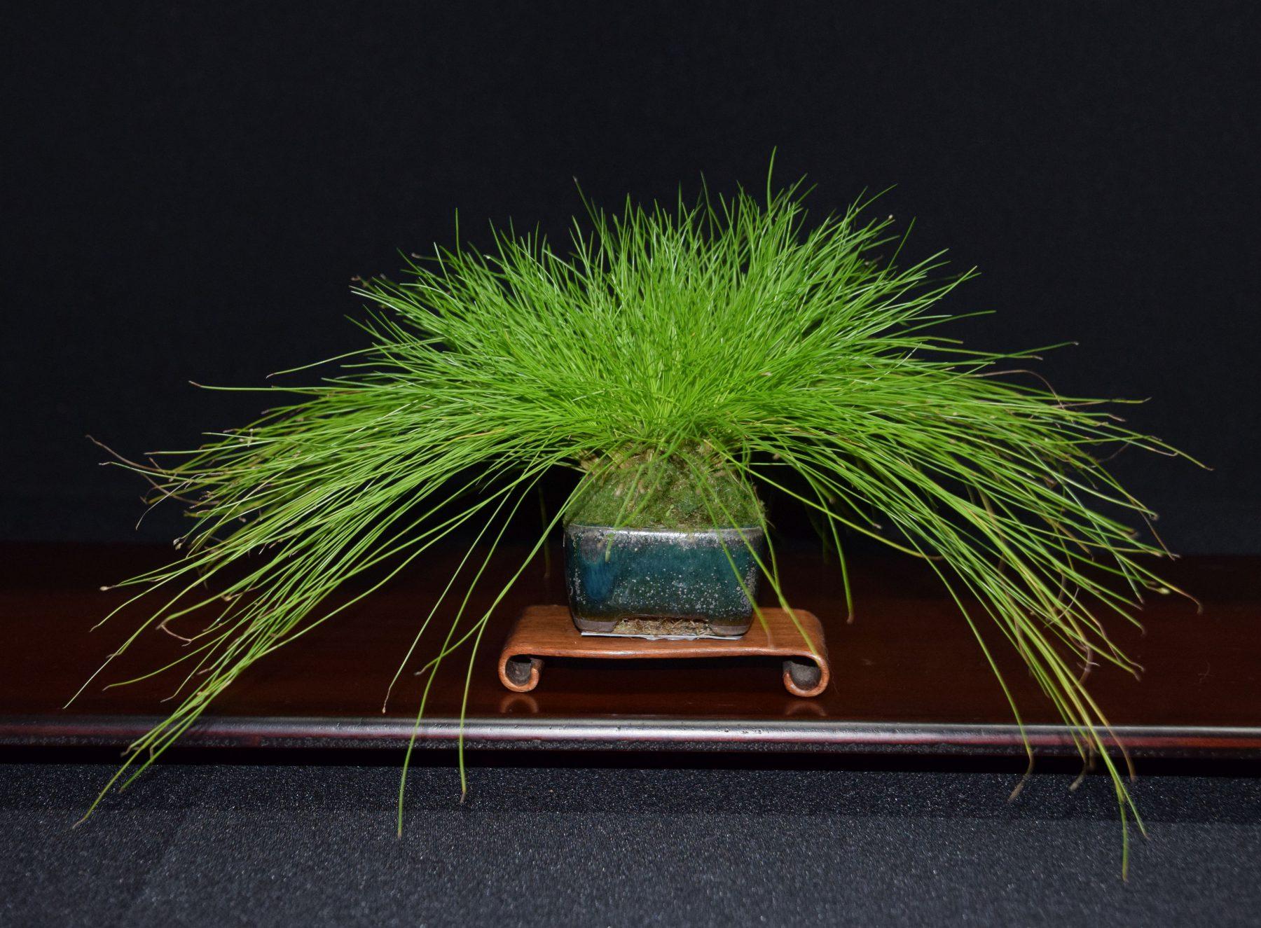 bonsai-museum-luis-vallejo-037