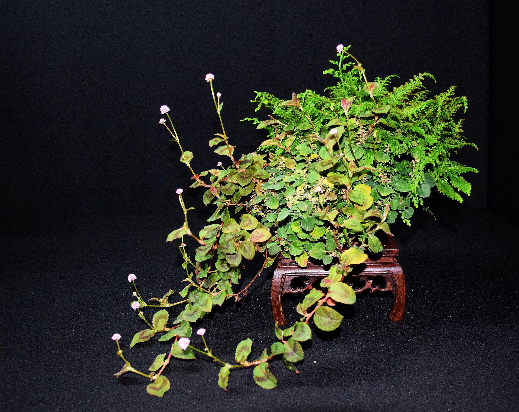 bonsai-museum-luis-vallejo-039