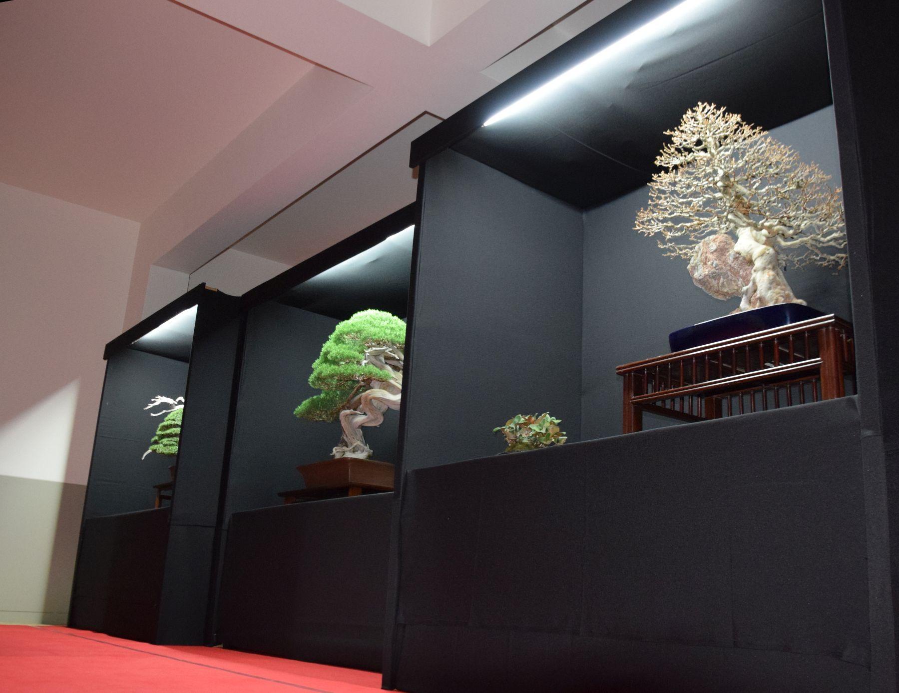 bonsai-museum-luis-vallejo-043
