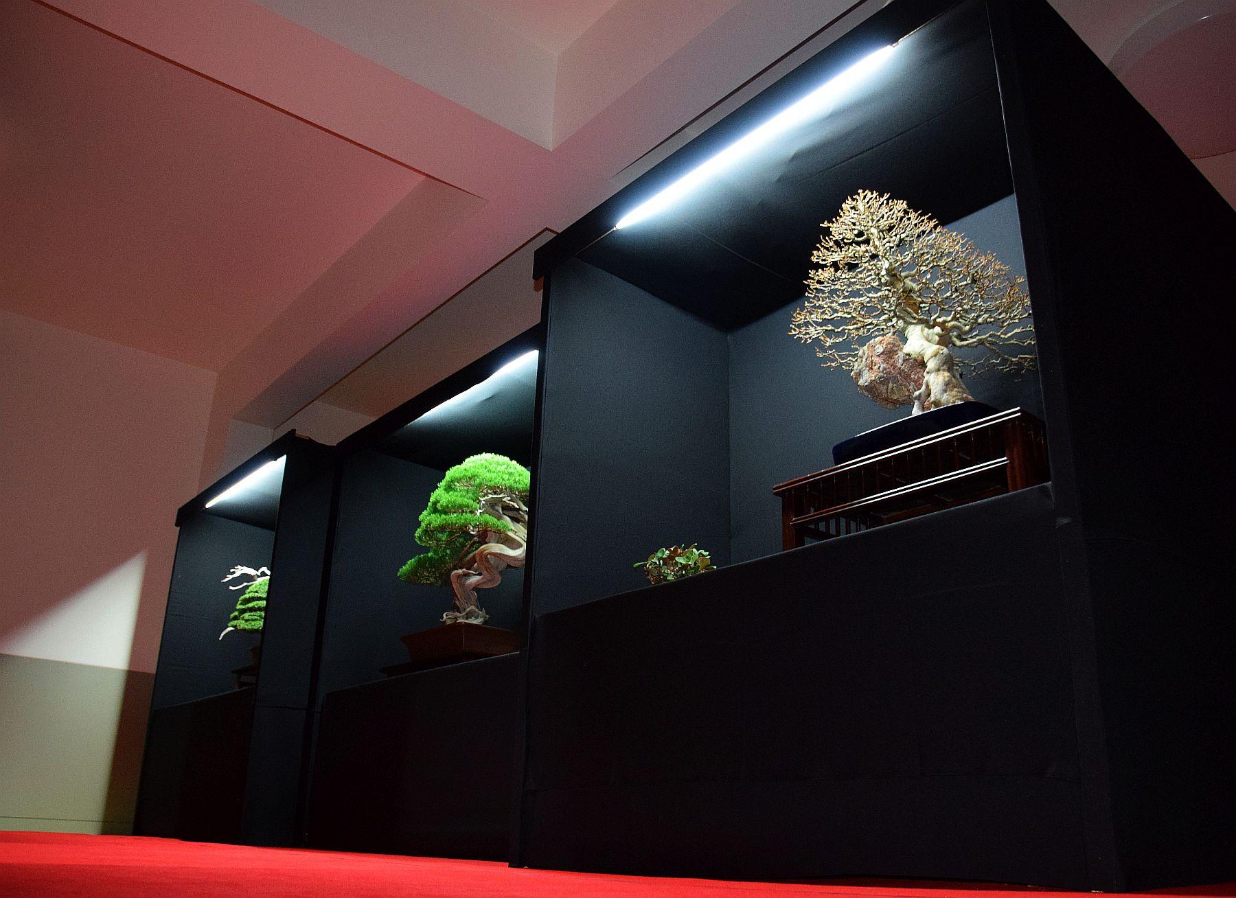 bonsai-museum-luis-vallejo-044