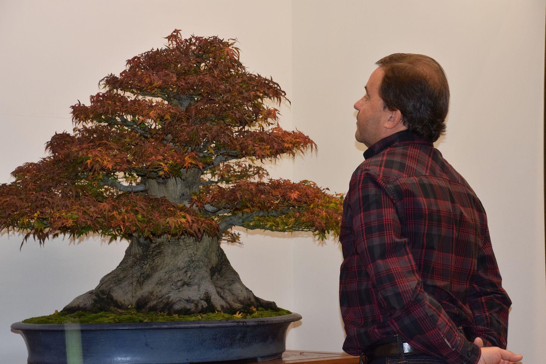 euk-bonsai-ten-2016-086