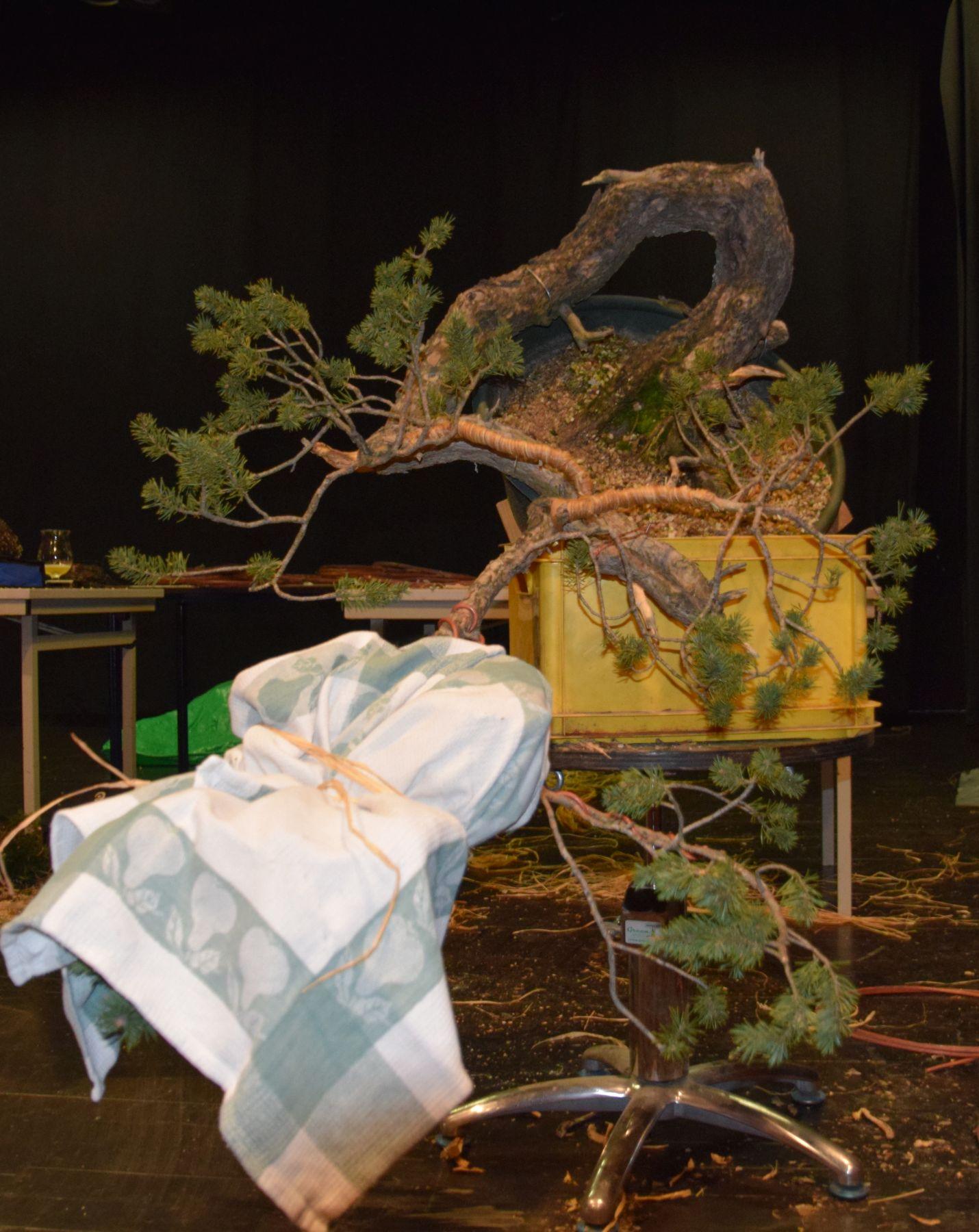 euk-bonsai-ten-2016-089