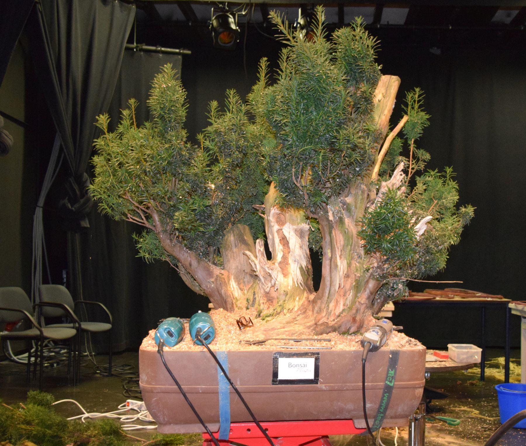 euk-bonsai-ten-2016-090