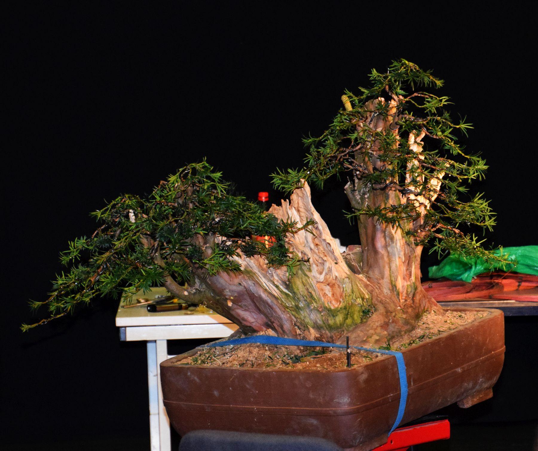 euk-bonsai-ten-2016-102
