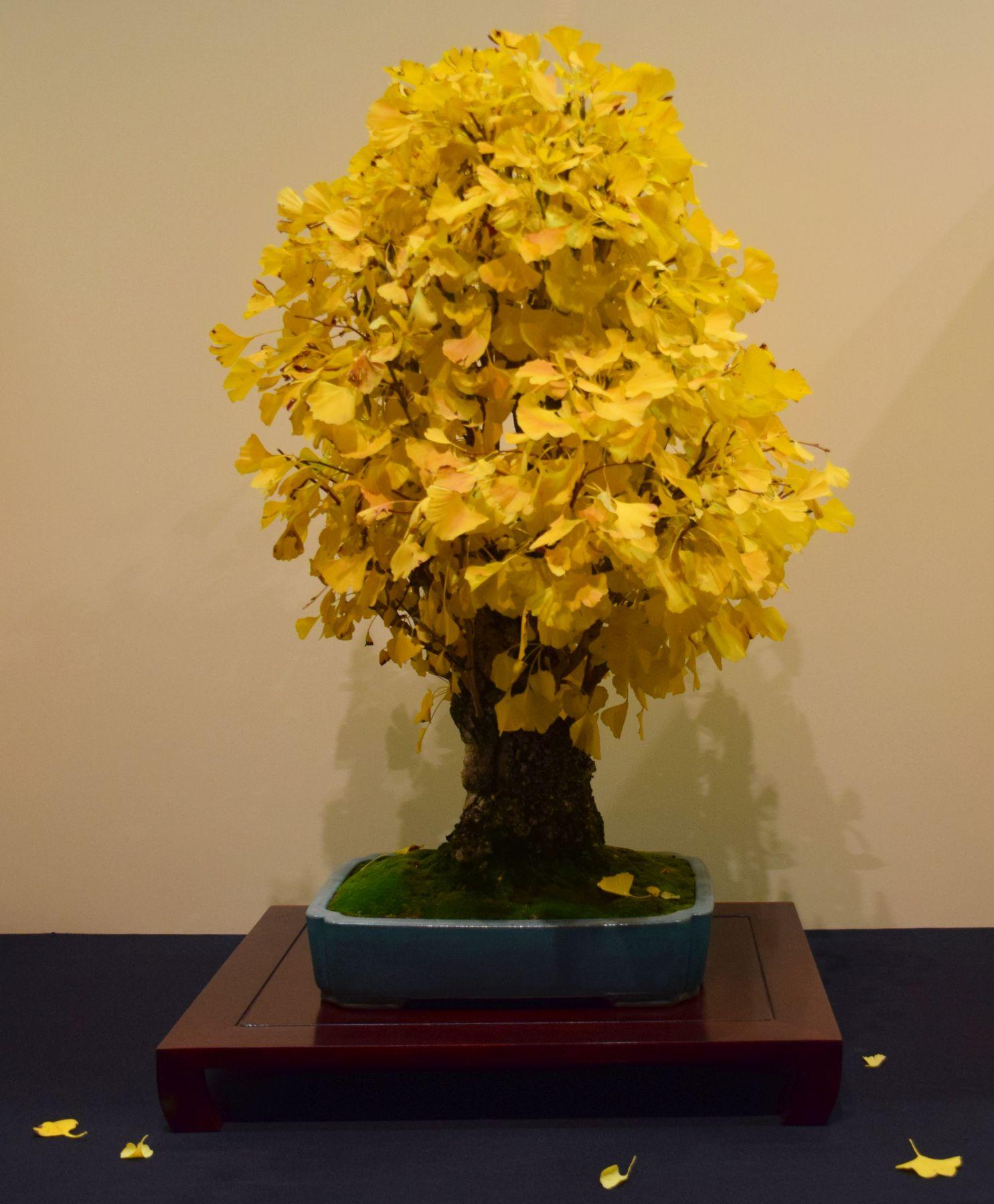 euk-bonsai-ten-2016-jp-polmans-collectie-010