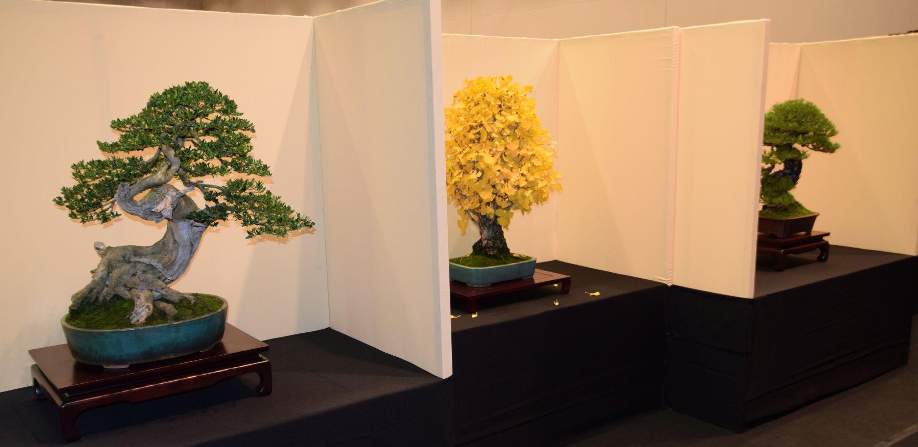euk-bonsai-ten-2016-jp-polmans-collectie-013
