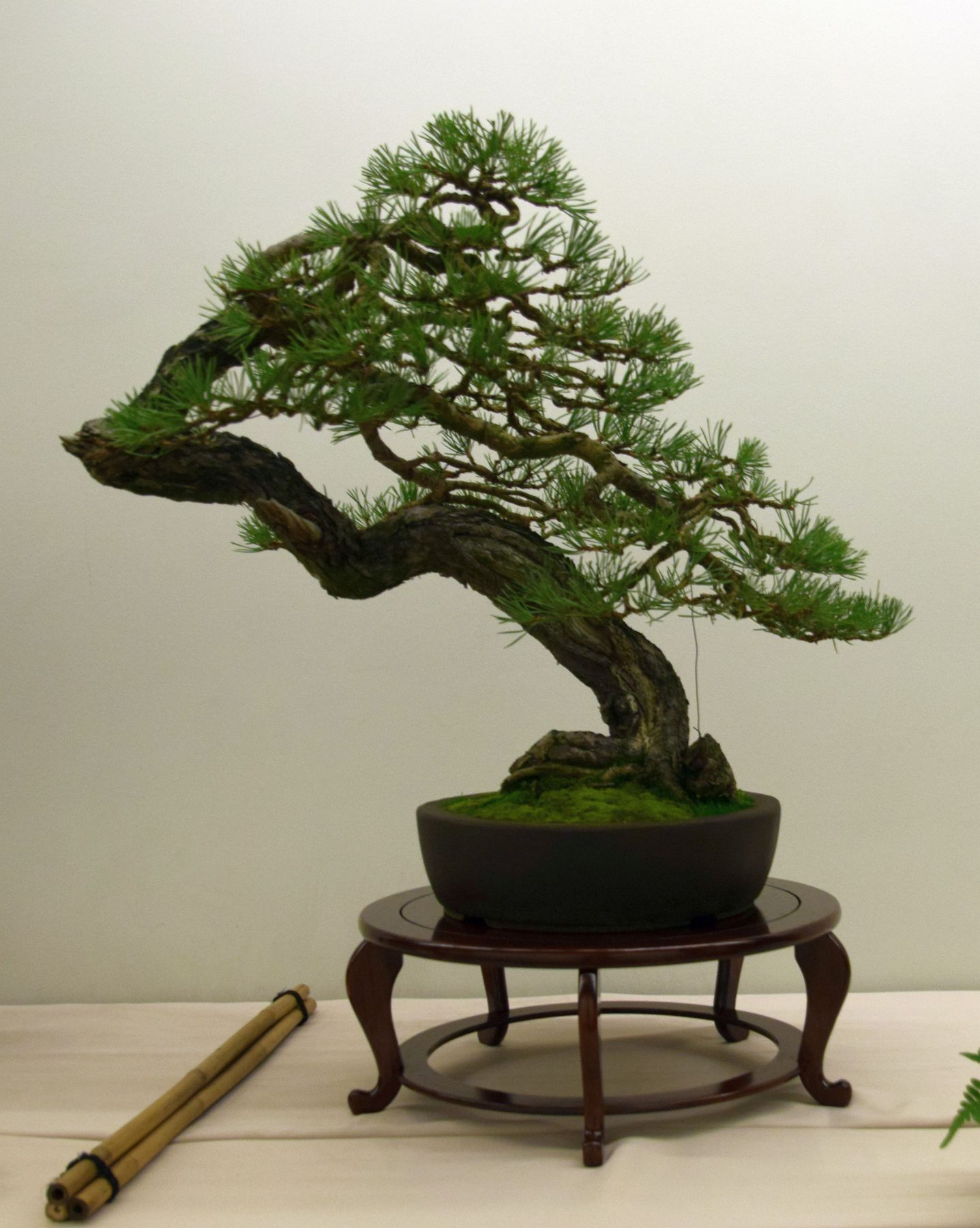 euk-bonsai-ten-2016-club-bonsai-003