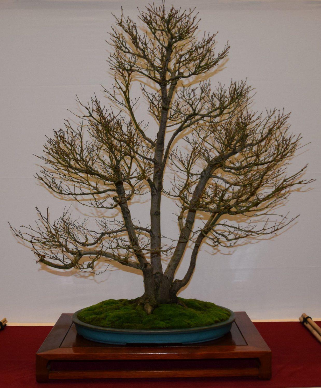 euk-bonsai-ten-2016-club-bonsai-014