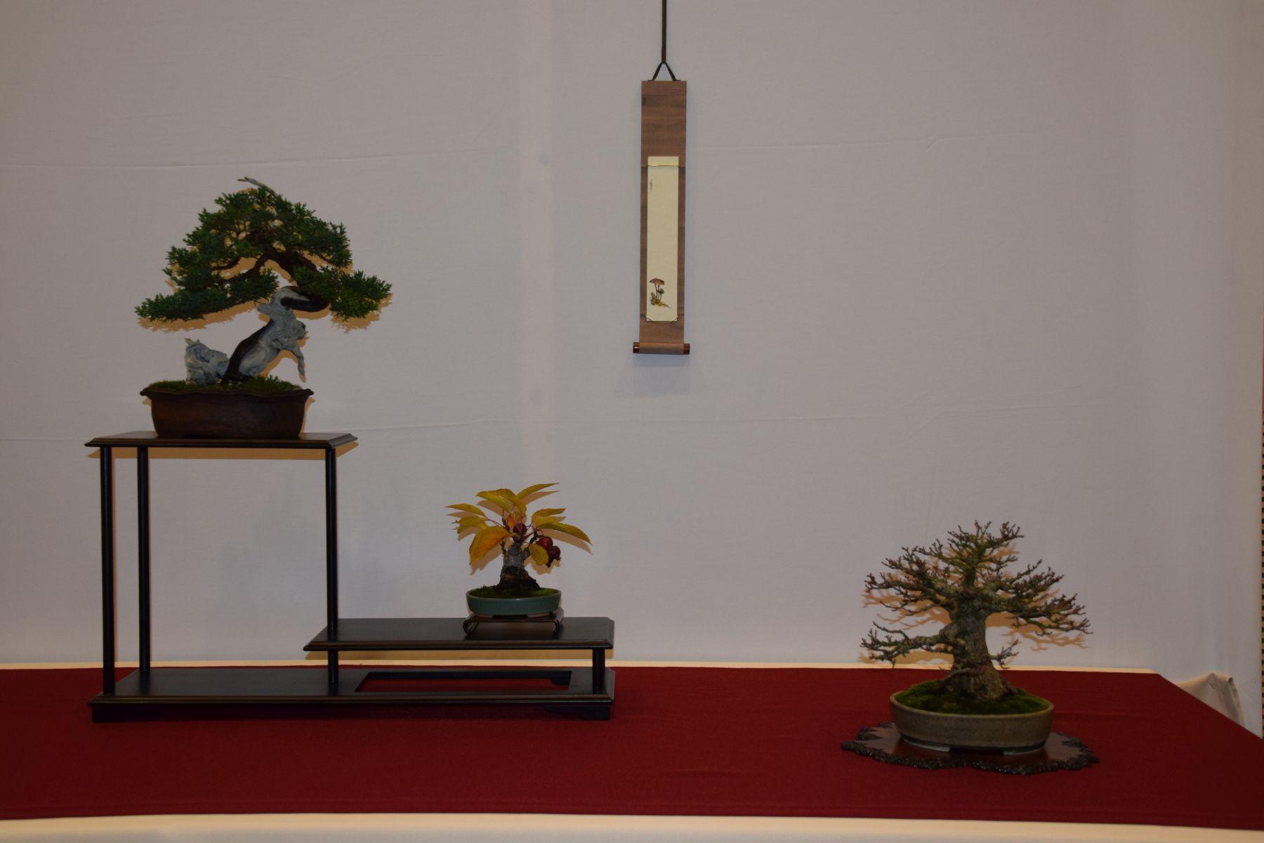 euk-bonsai-ten-2016-club-bonsai-018
