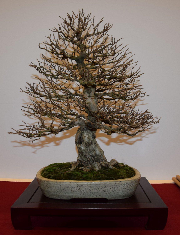 euk-bonsai-ten-2016-club-bonsai-031