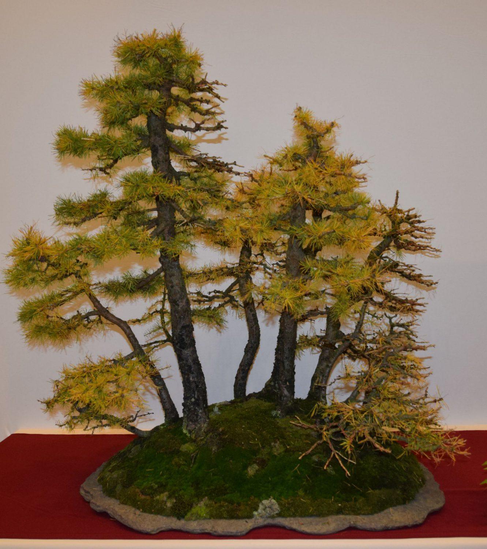 euk-bonsai-ten-2016-club-bonsai-047