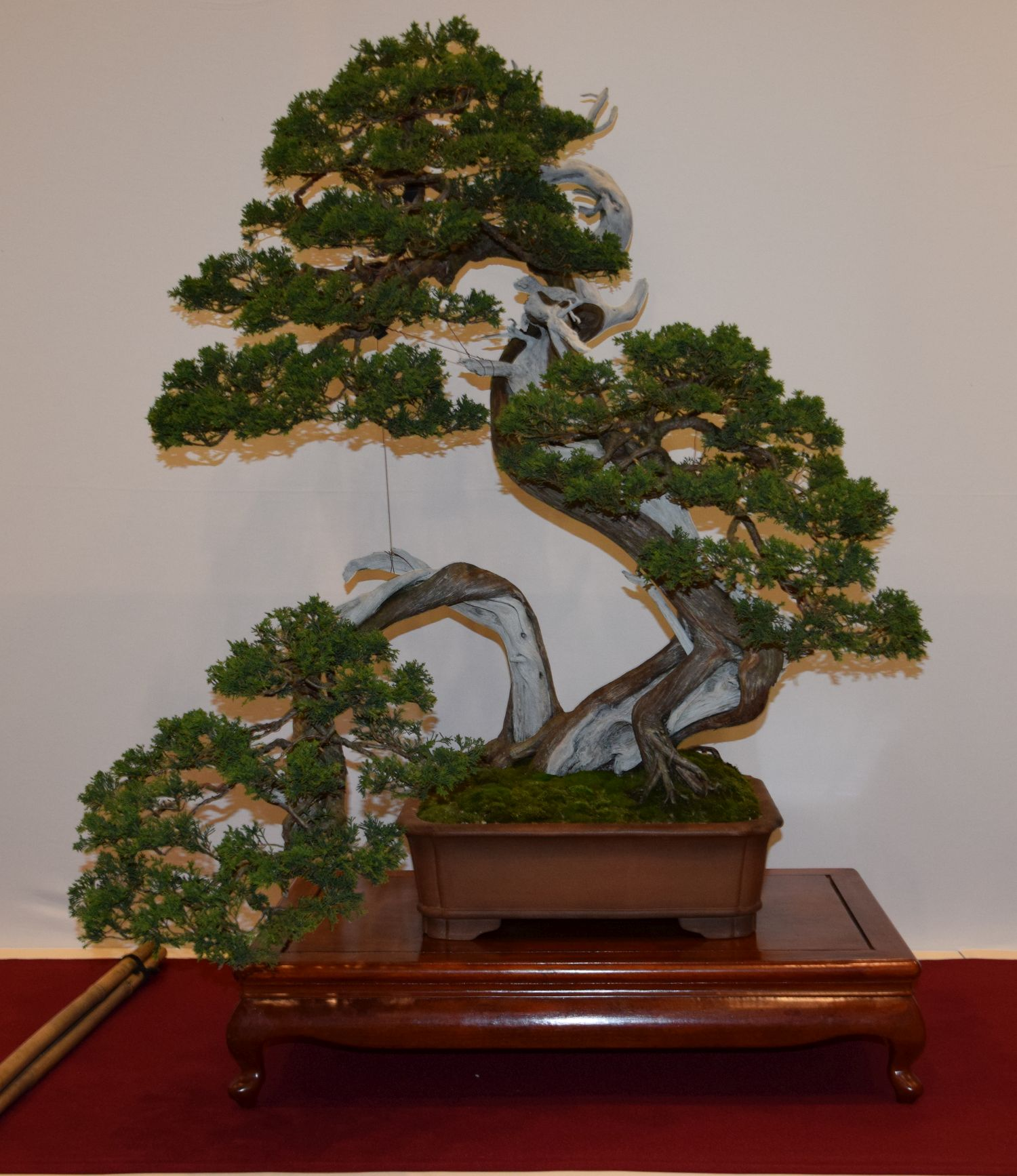euk-bonsai-ten-2016-club-bonsai-048