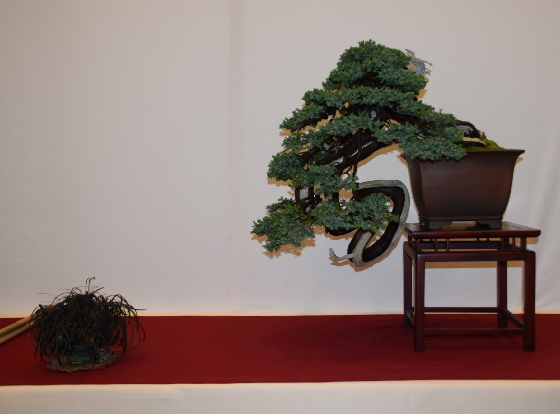 euk-bonsai-ten-2016-club-bonsai-053