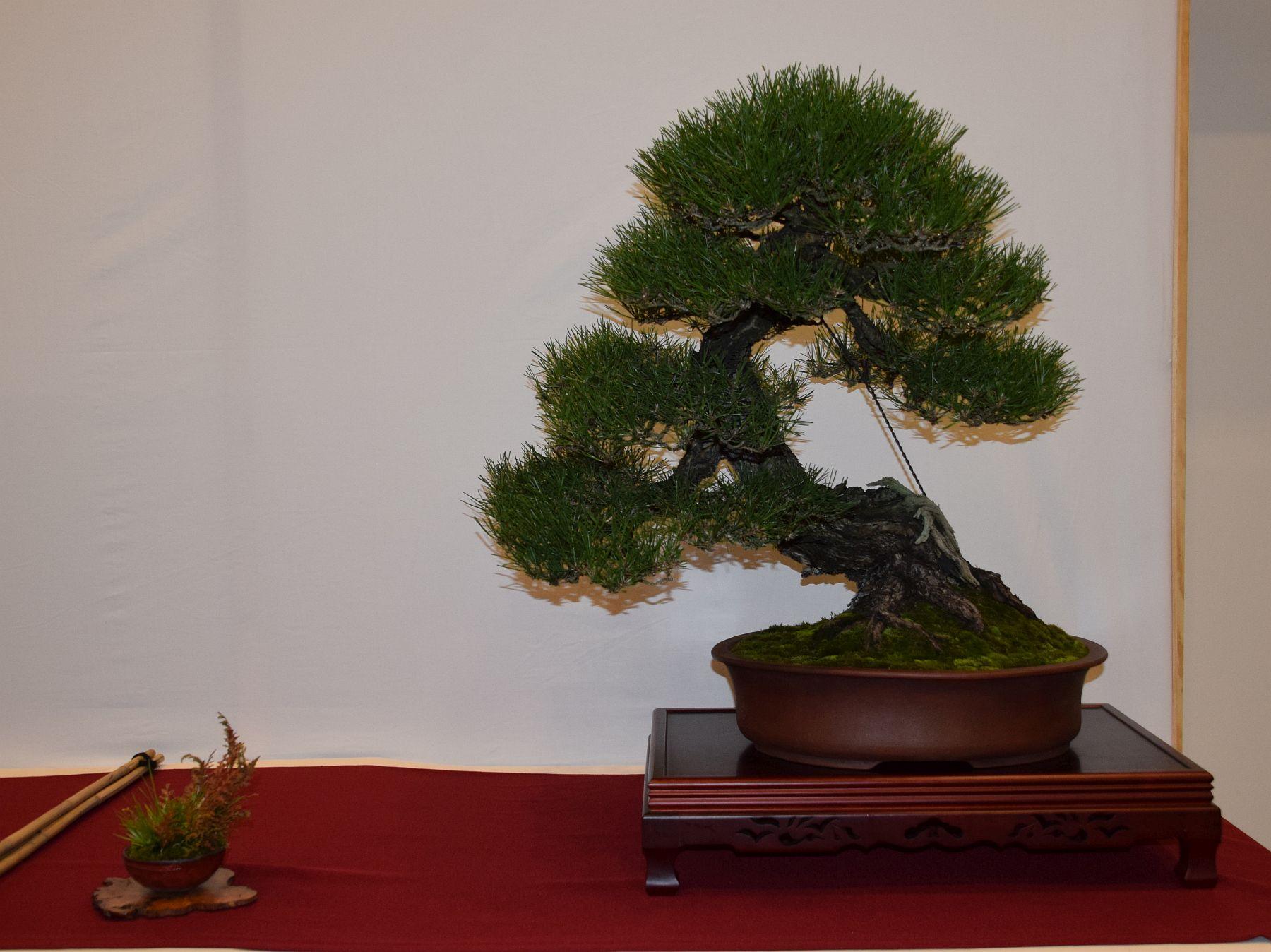 euk-bonsai-ten-2016-club-bonsai-067