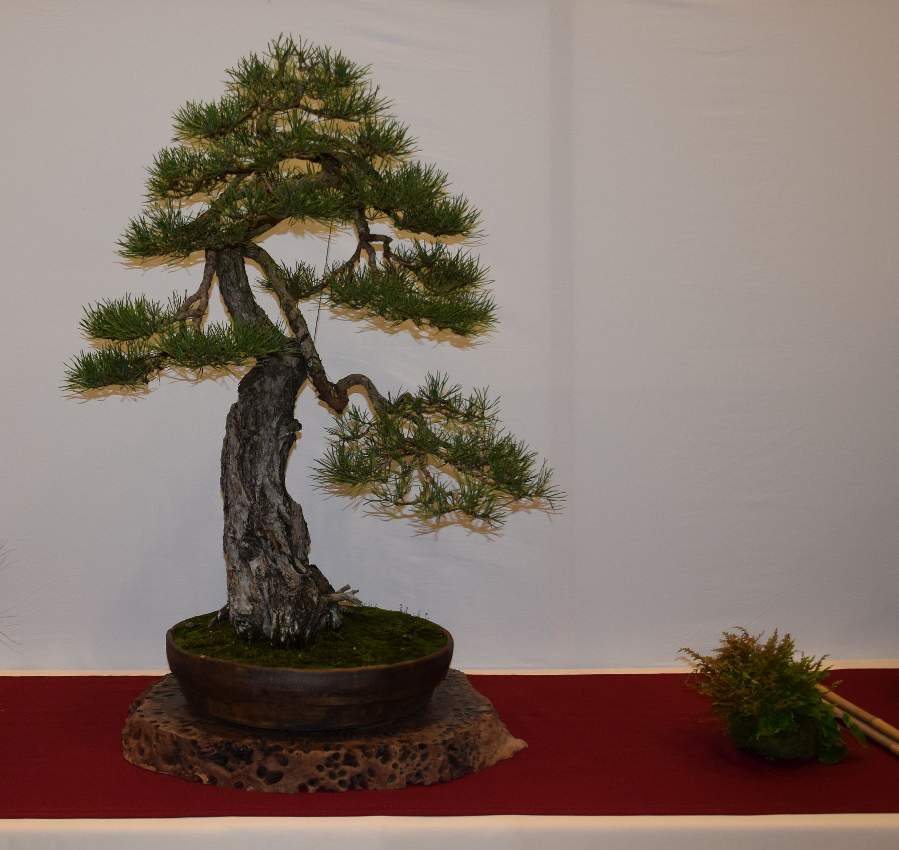 euk-bonsai-ten-2016-club-bonsai-069