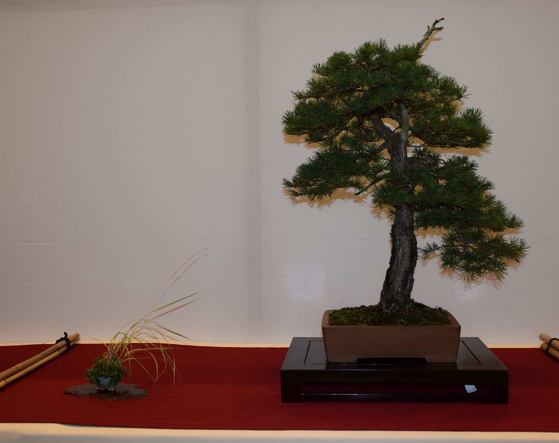 euk-bonsai-ten-2016-club-bonsai-073