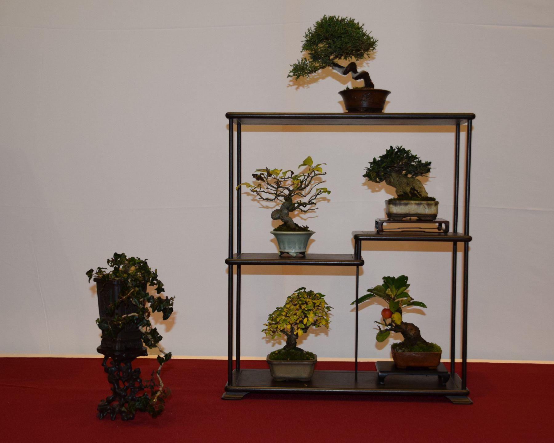 euk-bonsai-ten-2016-club-bonsai-081