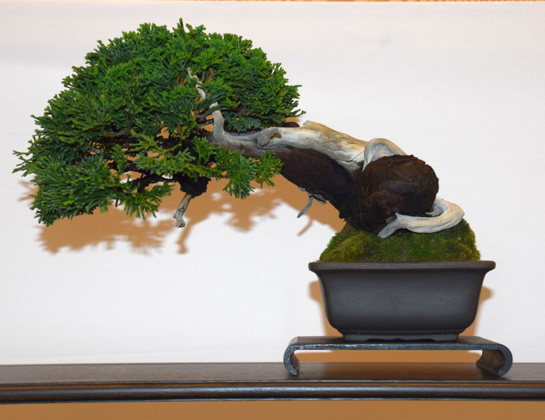 euk-bonsai-ten-2016-club-bonsai-102