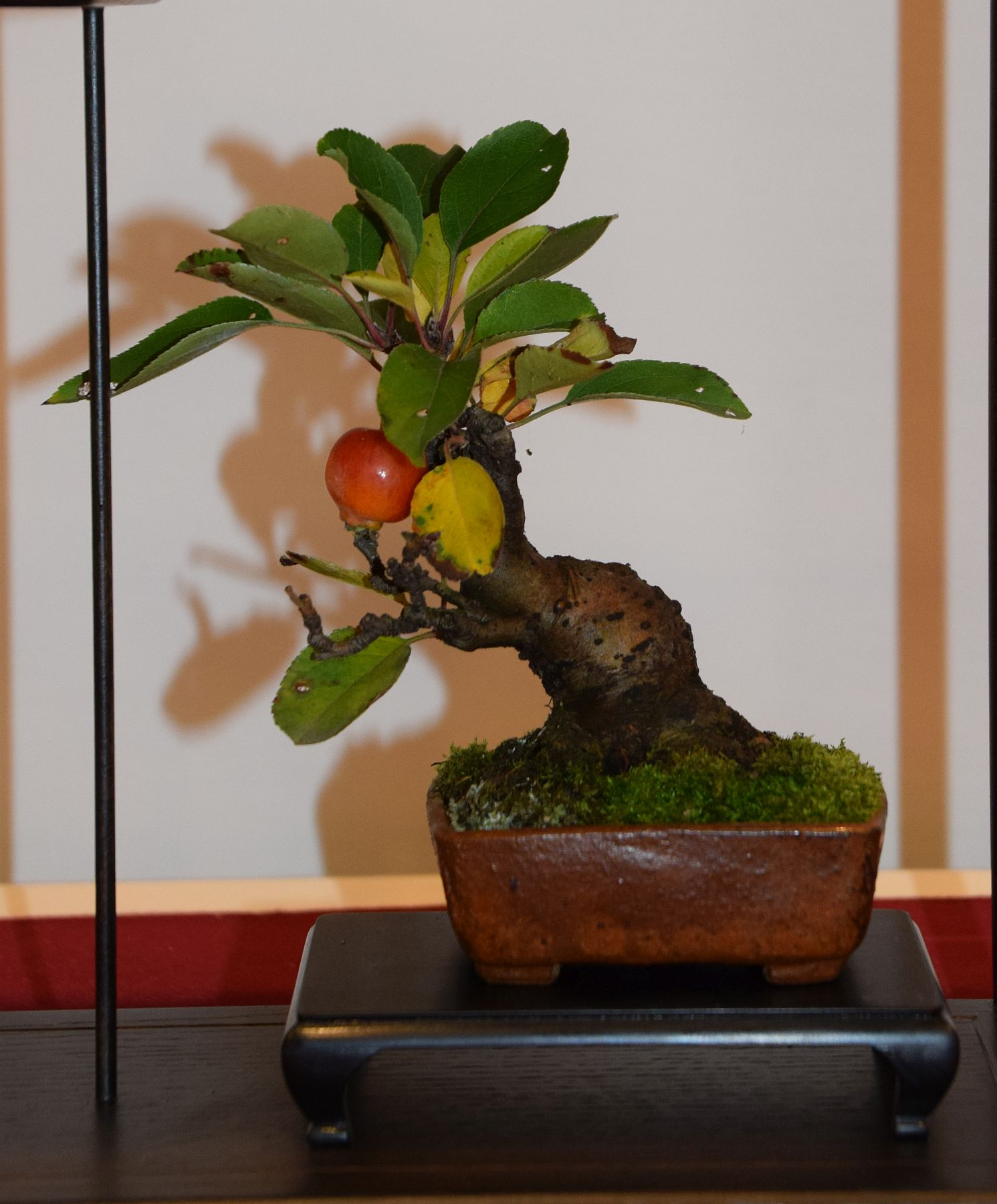 euk-bonsai-ten-2016-club-bonsai-111