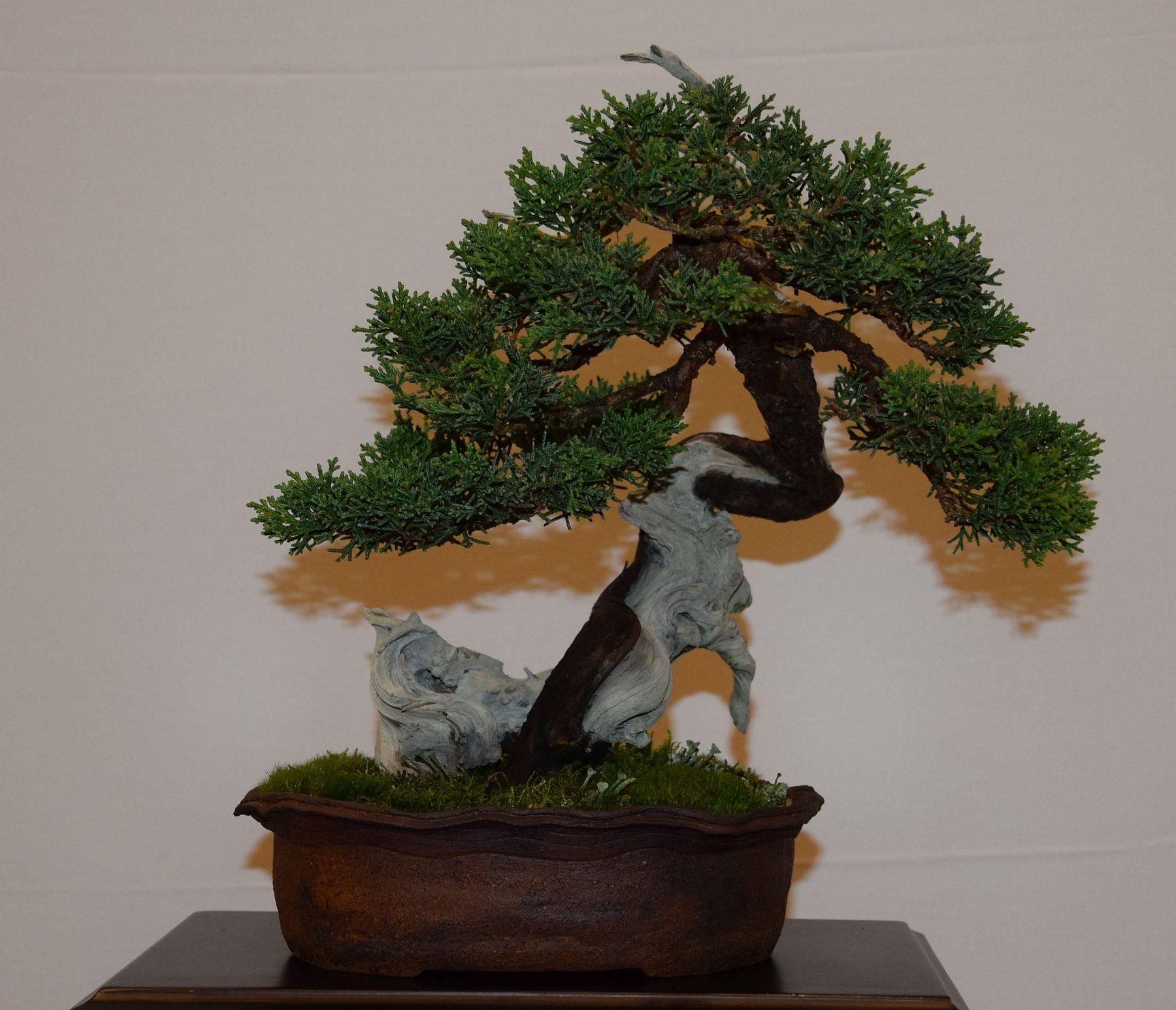 euk-bonsai-ten-2016-club-bonsai-123