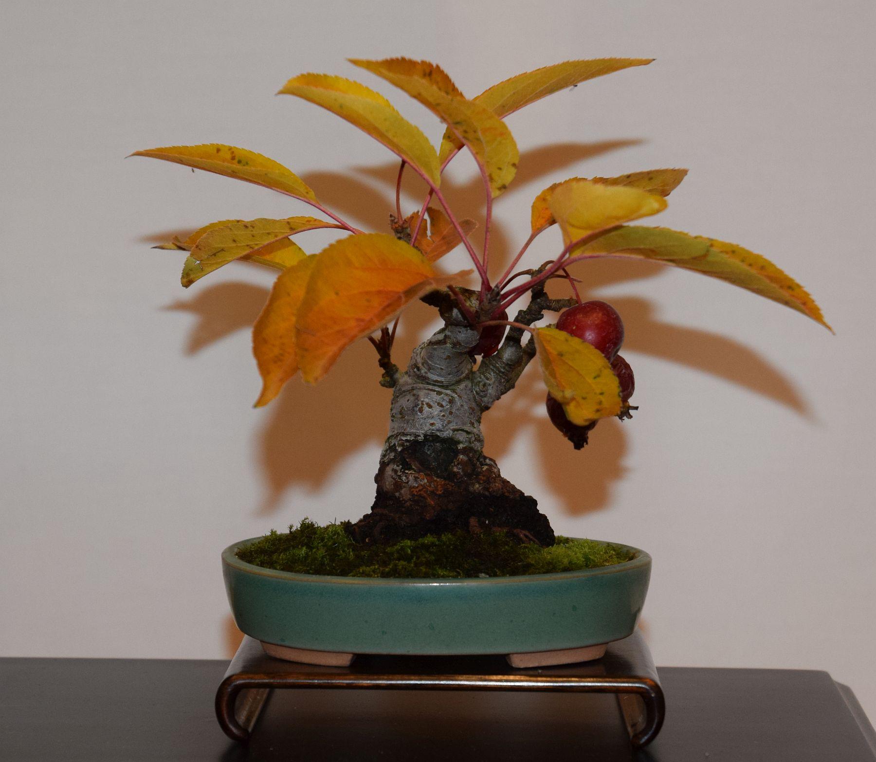 euk-bonsai-ten-2016-club-bonsai-124