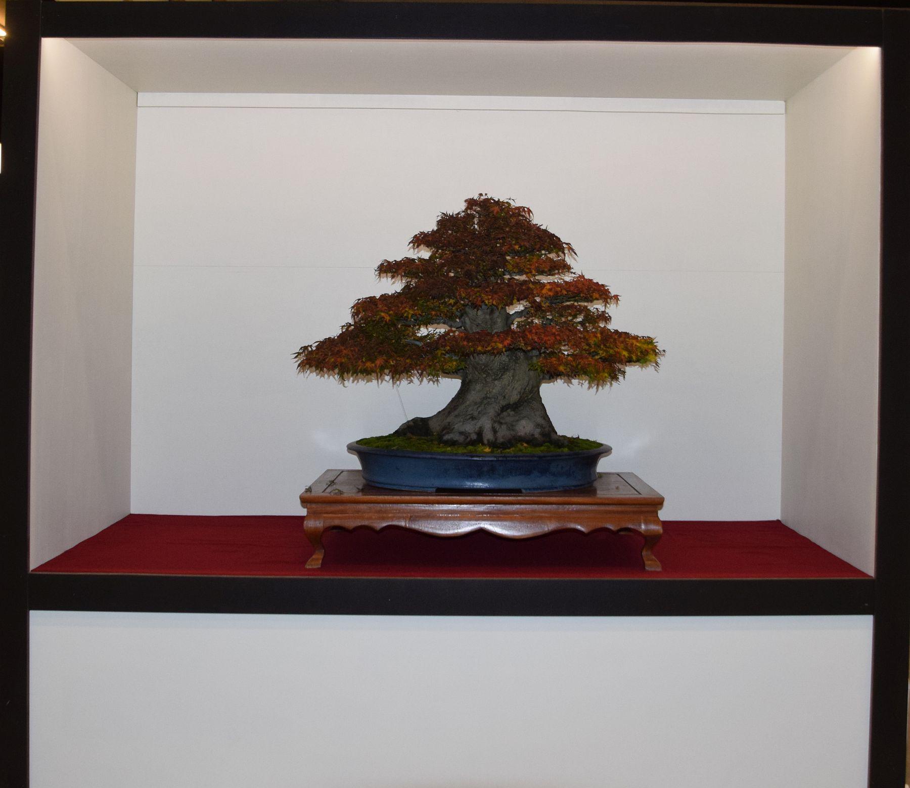 euk-bonsai-ten-2016-club-bonsai-132