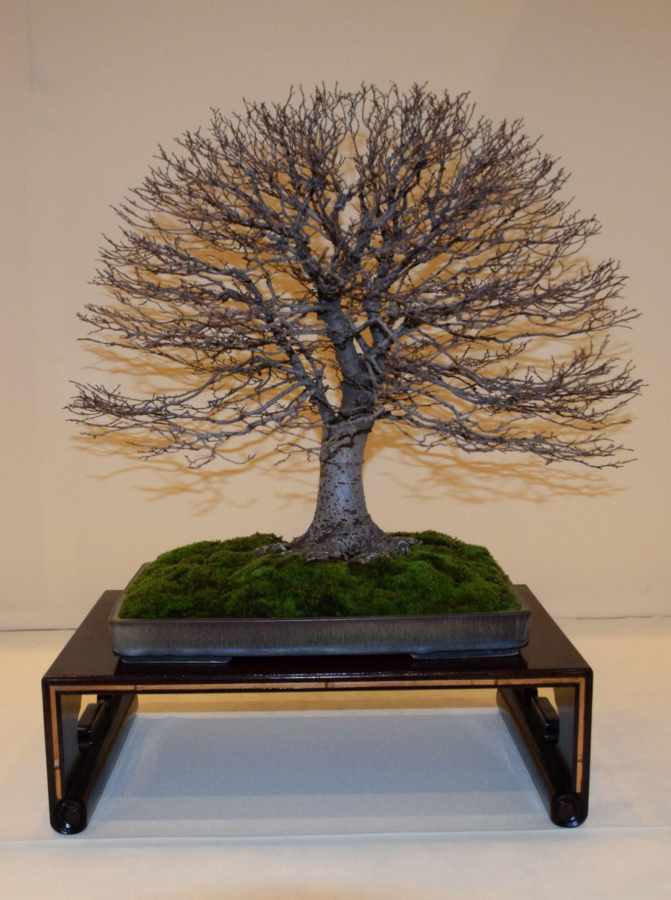 euk-bonsai-ten-2016-club-bonsai-151